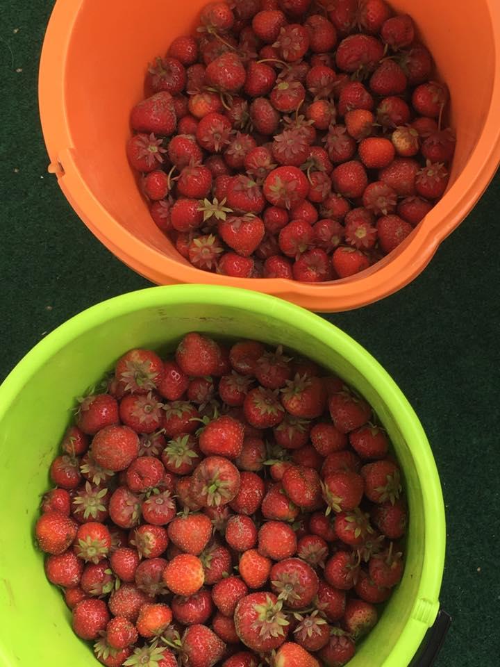 jordgubbar1o2