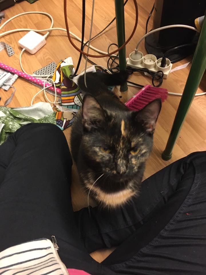 kissen-mimmi2